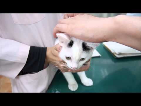 子猫のレボリューション