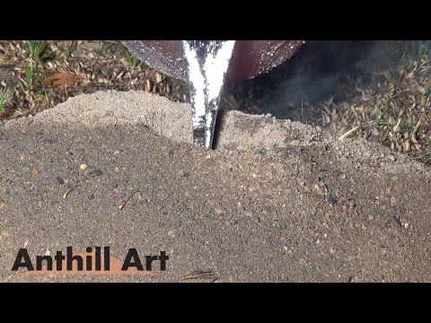 Casting a Bigger Fire Ant Colony with Molten Aluminum (Cast #057)