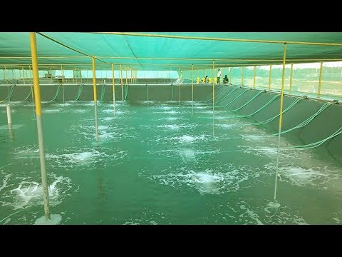 How to Start a Business - Brine Shrimp Hatchery Business Ideas in