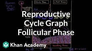 Reproductive cycle graph-Follicular phase | NCLEX-RN | Khan Academy