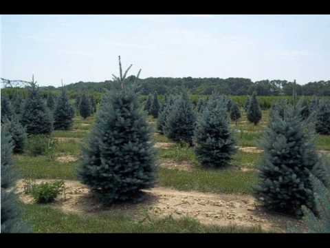 We Deliver to Boston Our Trees  And Shrubs