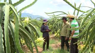 Cách trồng Thanh Long