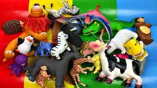 Lots of Zoo Animals Real Safari Videos And Animal Toys Learn Colors For Kids