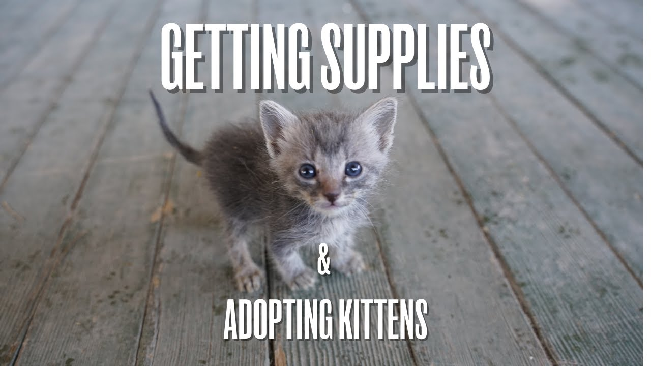 Getting Supplies in An Abandoned Ghost Town (and Adopting Kittens!)