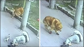 Cat Falls From Sky And Crashes Onto Man's Head, Knocking Him Unconscious