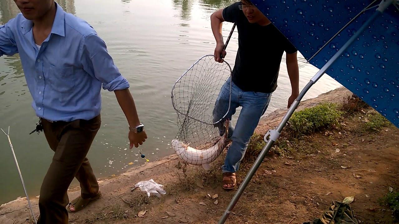 Đồ Câu Sinh Viên | Câu cá trắm tại hồ câu điều hòa