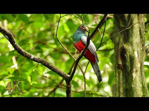 Panama: Pristine 1h footage in 4K of Soberania's stunning wildlife