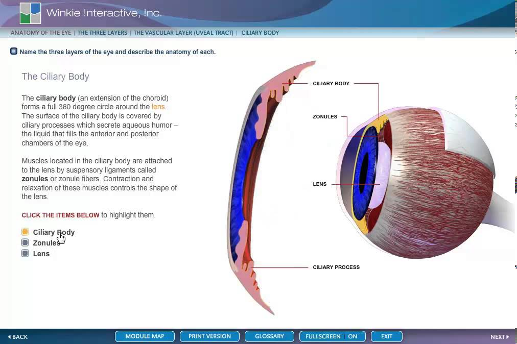 ANATOMY EYE CILIARY BODY - YouTube
