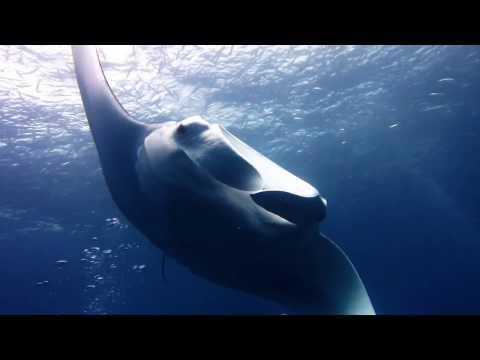 Palau scuba diving 2017