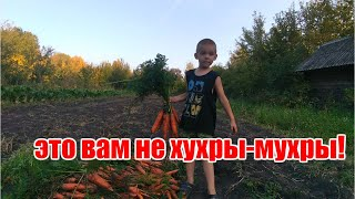 Урожай моркови// как мы храним морковь зимой