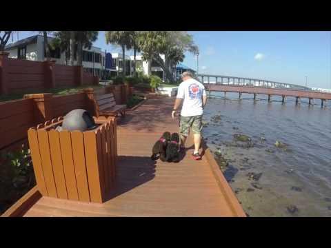5 Month Old Cockapoo Toby | Treasure Coast Dog Training | Port Saint Lucie Dog Training