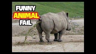 Best Funny Animals Fails June 2017 (Part 1) || Best Fails Compilation By FailADD
