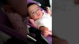 Asi bebek