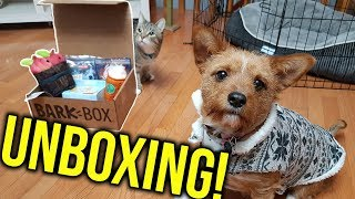 BarkBox Unboxing -- Is It Worth it? Dog Lootbox Review (Nov. 2017)
