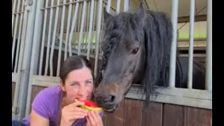 Johnny loves watermelon! Would the other mares like it too? Fair sharing! Friesian Horses.