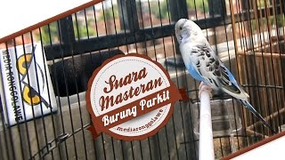 Video SUARA BURUNG : Suara Masteran Parkit Gacor Ngerol Panjang download MP3, 3GP, MP4, WEBM, AVI, FLV Juli 2018