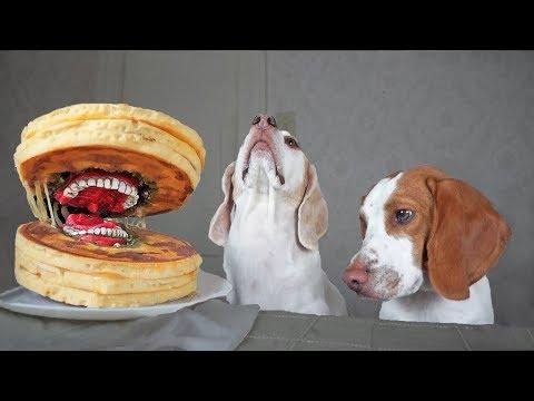 Funny Dogs vs Annoying Pancake Prank! Funny Dogs Maymo, Potpie, & Penny