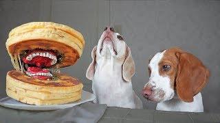 funny-dogs-vs-annoying-pancake-prank-funny-dogs-maymo-potpie-penny