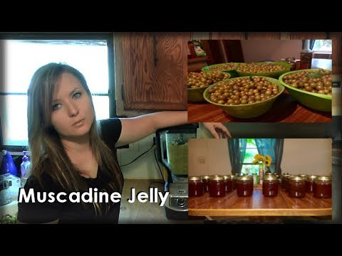 Making Muscadine Jelly