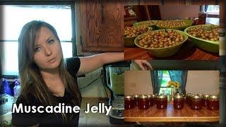 Making Muscadine Jelly