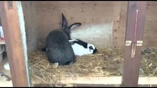 кролик четко кончил
