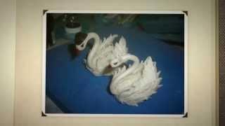 Лебедь своими руками для тортика(Лебедь своими руками. Предлагаю вам посмотреть мастер-класс по лепке белых лебедей. Лепить их можно из..., 2014-07-23T10:46:59.000Z)