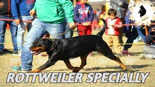 Dehradoon Dog Show 2019 !! DOON VALLEY KENNAL CLUB !! DOG SHOW IN INDIA!!