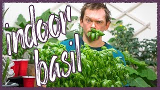 Grow Perfect Basil indoors!