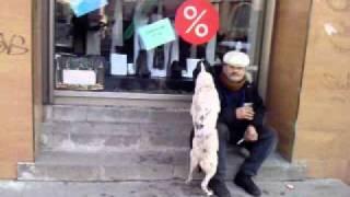 собака насилует