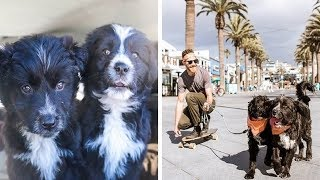 Dogs Before And After They Were Rescued By Their Owners