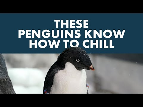 chill-out-at-seaworld's-antarctica:-empire-of-the-penguin™
