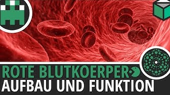 Rote Blutkörperchen Aufbau und Funktion einfach erklärt│Biologie Lernvideo [Learning Level Up]