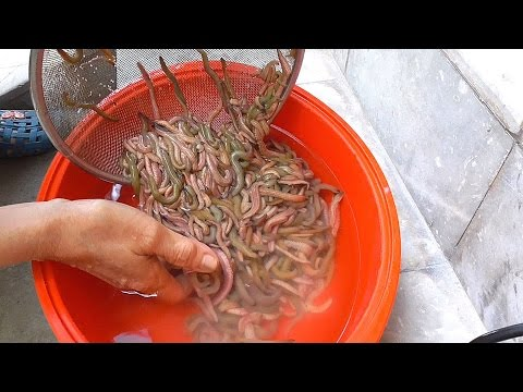 Cooking 1000 RIVER WORM in Vietnam - Crispy FULL river WORM - Vietnam street food