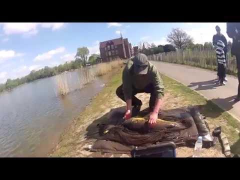 Urban fishing london - Big carp from london parks part 2
