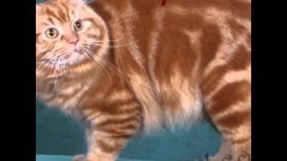 Самые красивые породы кошек в мире .