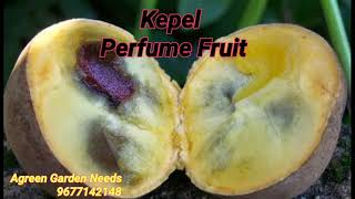 Kepel-Perfume Fruit ராஜ பரம்பரைக்கு மட்டும்தானா?... நாமளும் வளர்க்கலாம் வாங்க. Agreen Garden Needs