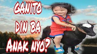 Cute babies: goat back riding dahil mahal ang kabayo 🤣