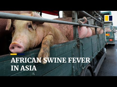 China's deadly African swine fever epidemic is spreading across Asia