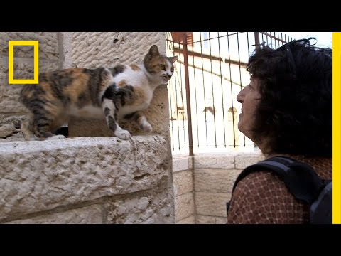 Holy Cats! Jerusalem's Strays And Their Unsung Guardian | National Geographic
