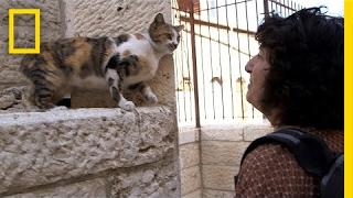 Holy Cats! Jerusalem