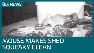 Man discovers houseproud mouse is keeping his shed squeaky clean | ITV News