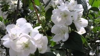 2015初夏の花