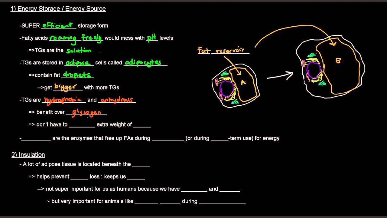 wgu biochemistry grt1 task 1 lipids essay Check out our top free essays on describe how organelles work together to make and task 1 - 5 - a+ work grt1 biochemistry entire course wgu rn-bsn - task 1.
