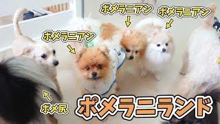 ポンプくん『仲間が増えてうれしいぜ!』 犬のひみつきちホームページ:...