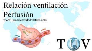relacion ventilacion alveolar vs perfusion v q