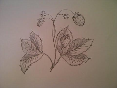 Wald-Erdbeeren zeichnen. Zeichnen lernen für Anfänger