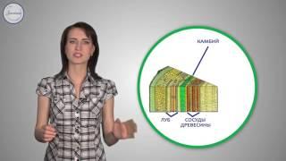 13  Биология 6кл  Рост и развитие растений