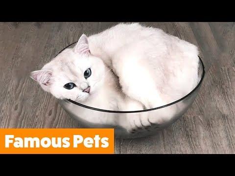 Famous Instagram Pets | Funny Pet Videos