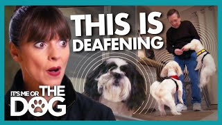 Barking and Violence Forces Owners to Work in the Closet! | It's Me or The Dog