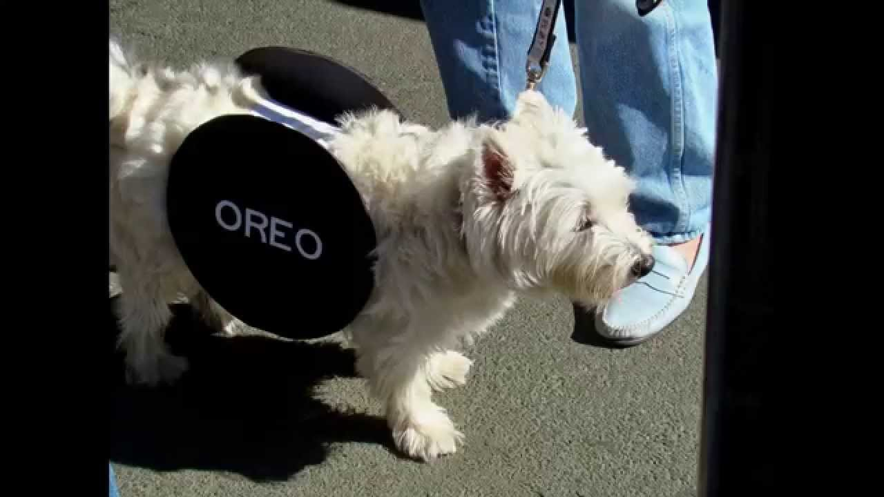 Dog Halloween Costumes: Funny Dog Costumes - YouTube